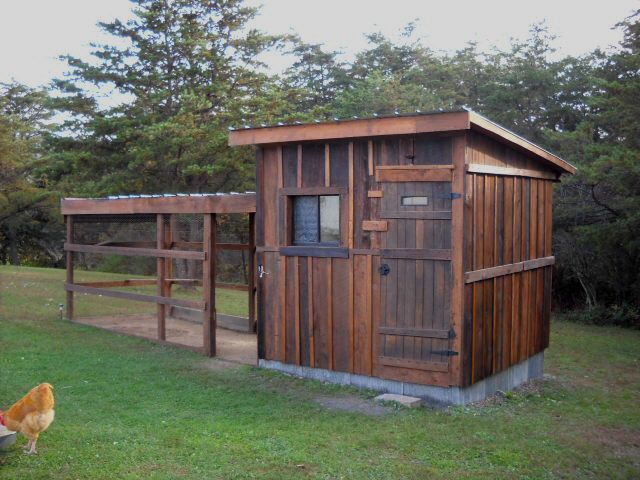 Backyard Chickens Coop : Building a functional home for your flock doesnt have to cost much