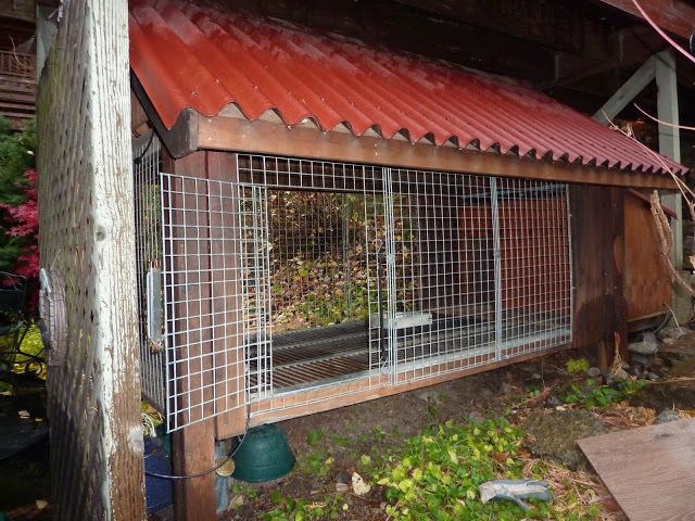 Dog Kennel To Coop Backyard Chickens