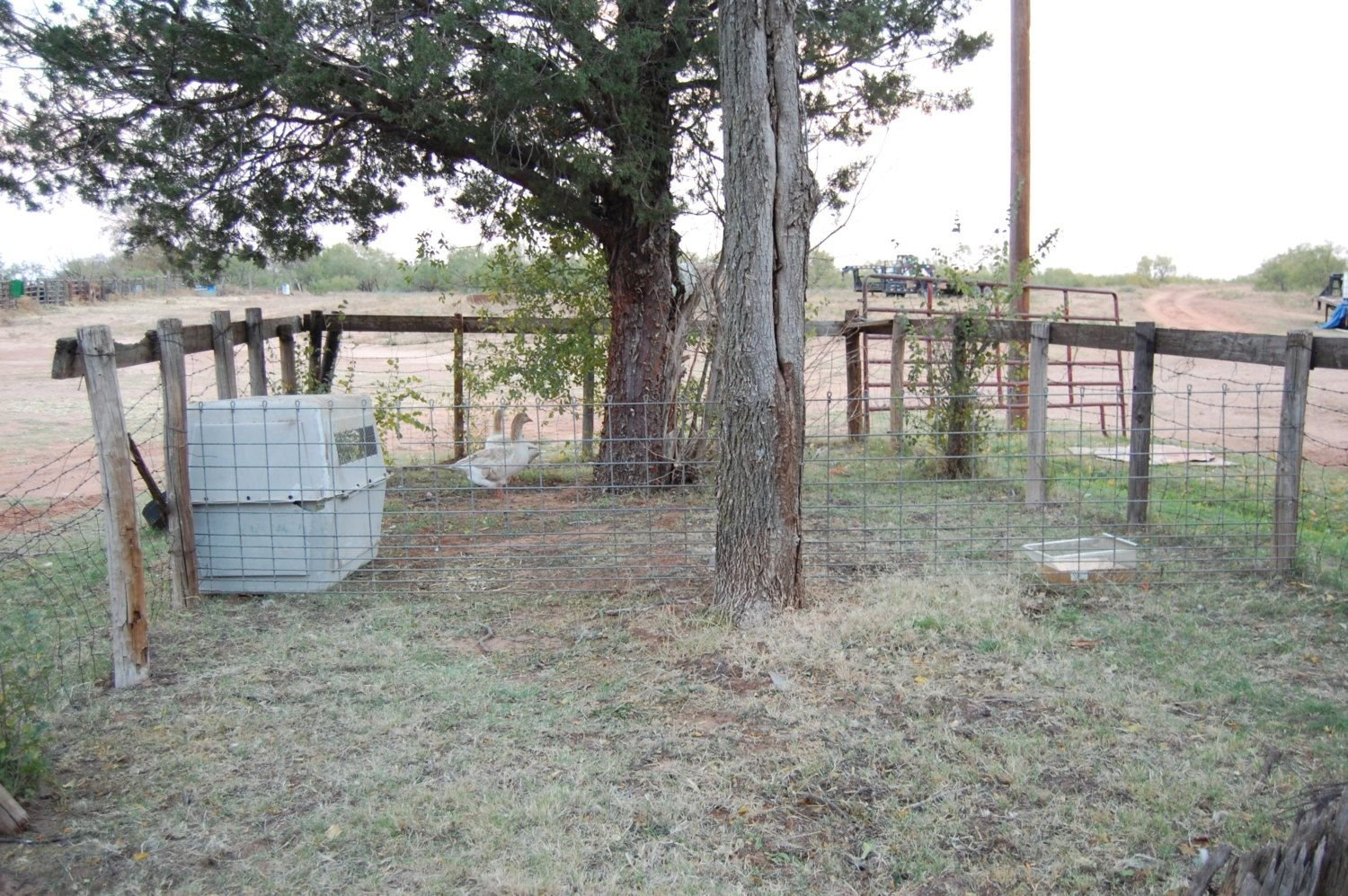 lets see your geese and breeder pens backyard chickens