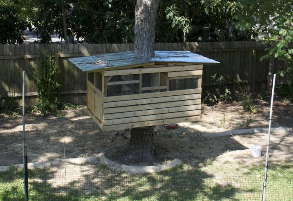 unusual chicken coop