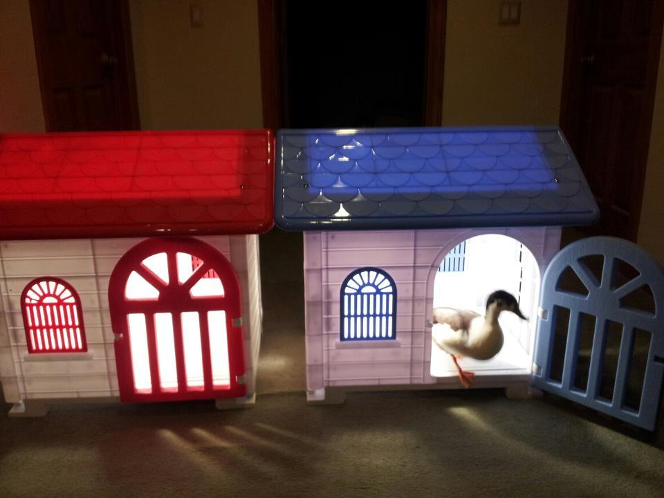 My call ducks house plastic dog house with door for Plastic duck house