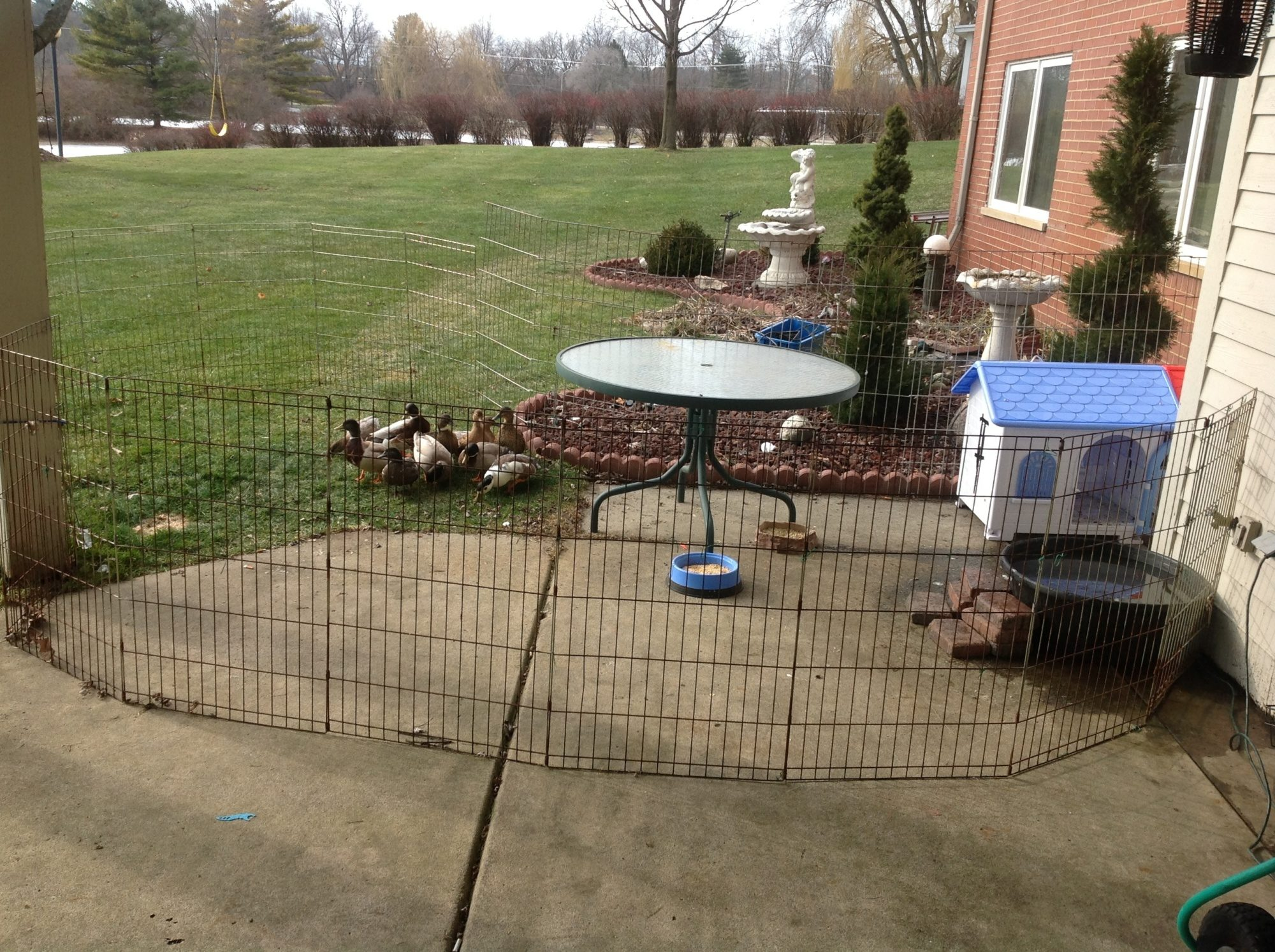 my call ducks house plastic dog house with door backyard chickens