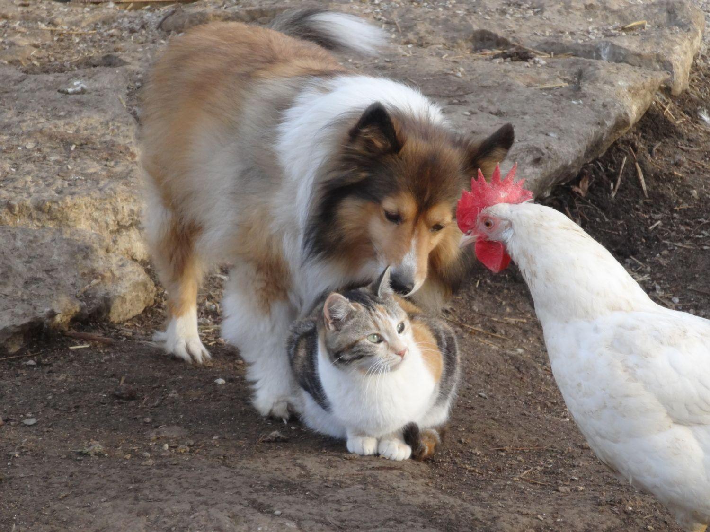 big cat rescue sarasota coupons