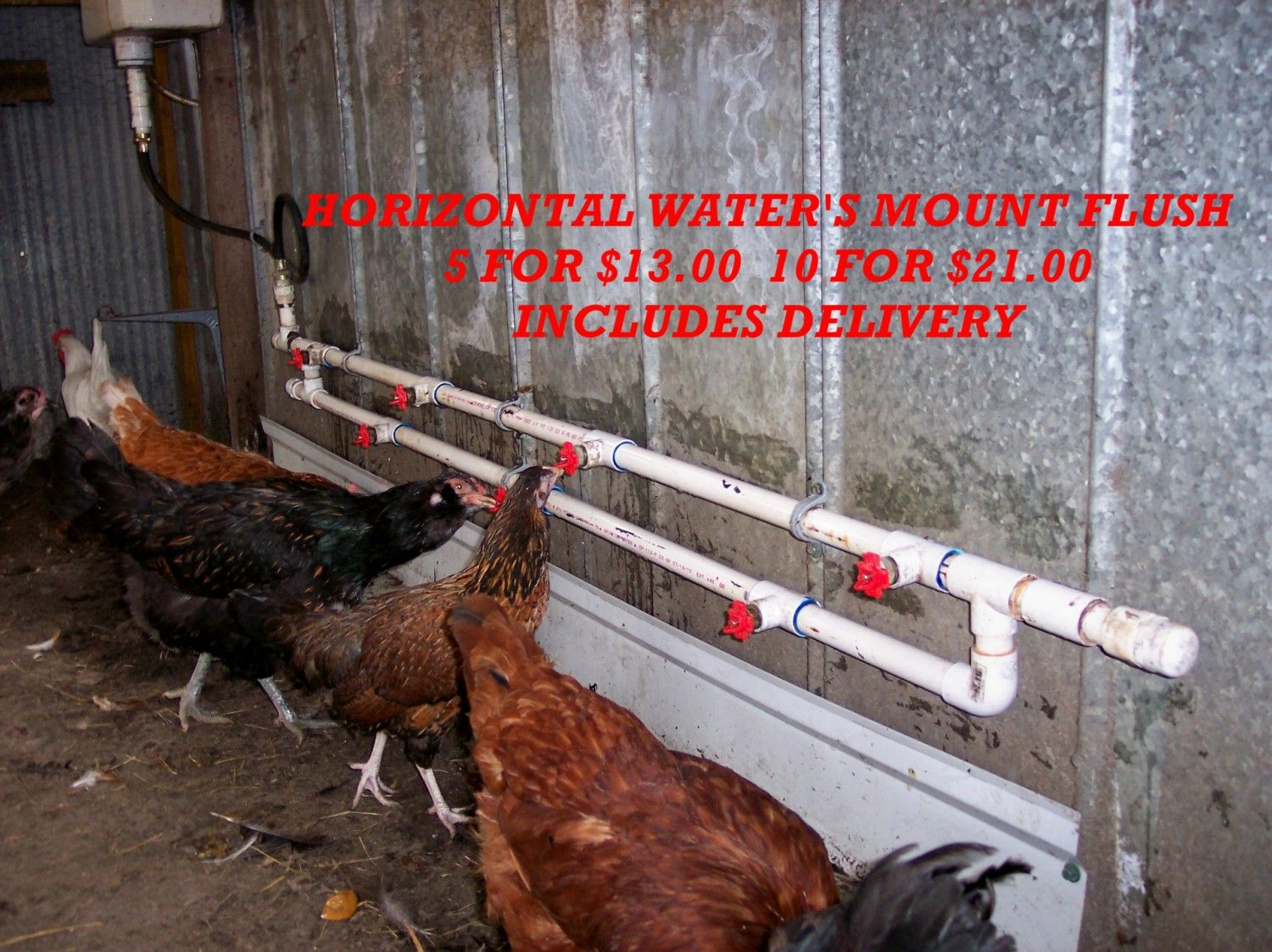Chicken Watering System For Less Than 40 Backyard Chickens