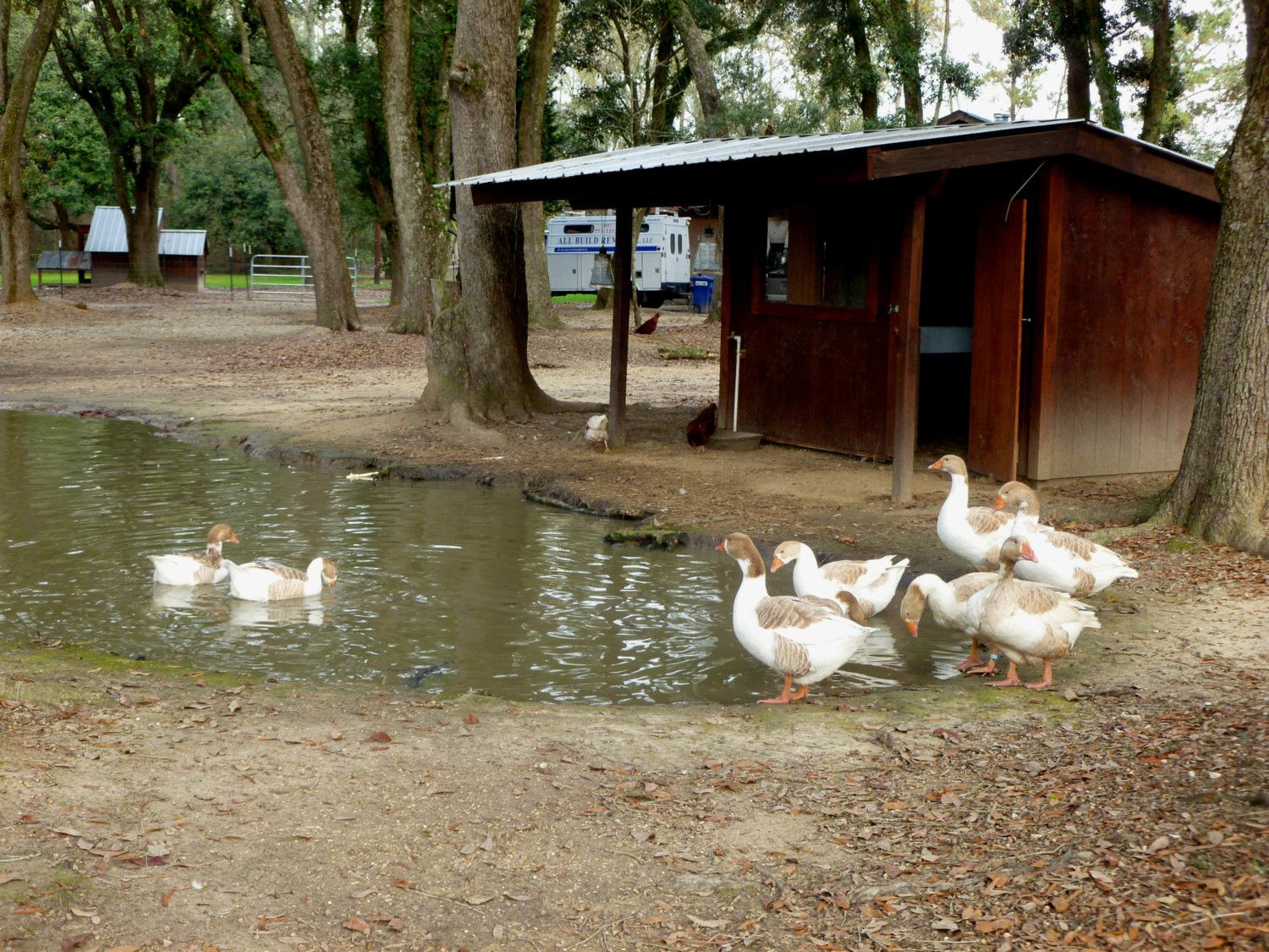 Louisiana la yers peeps page 1650 for Duck and goose houses
