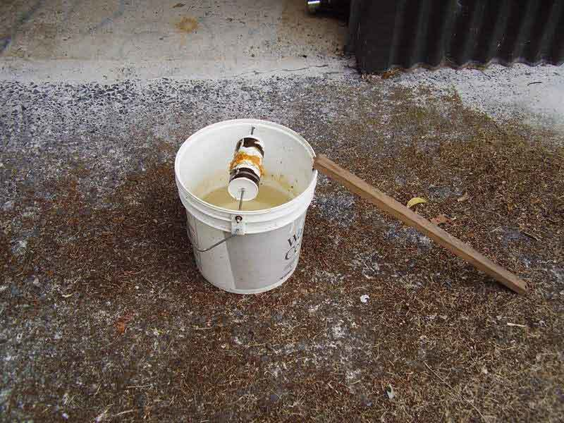 5 Gallon Bucket Mouse Trap Backyard Chickens