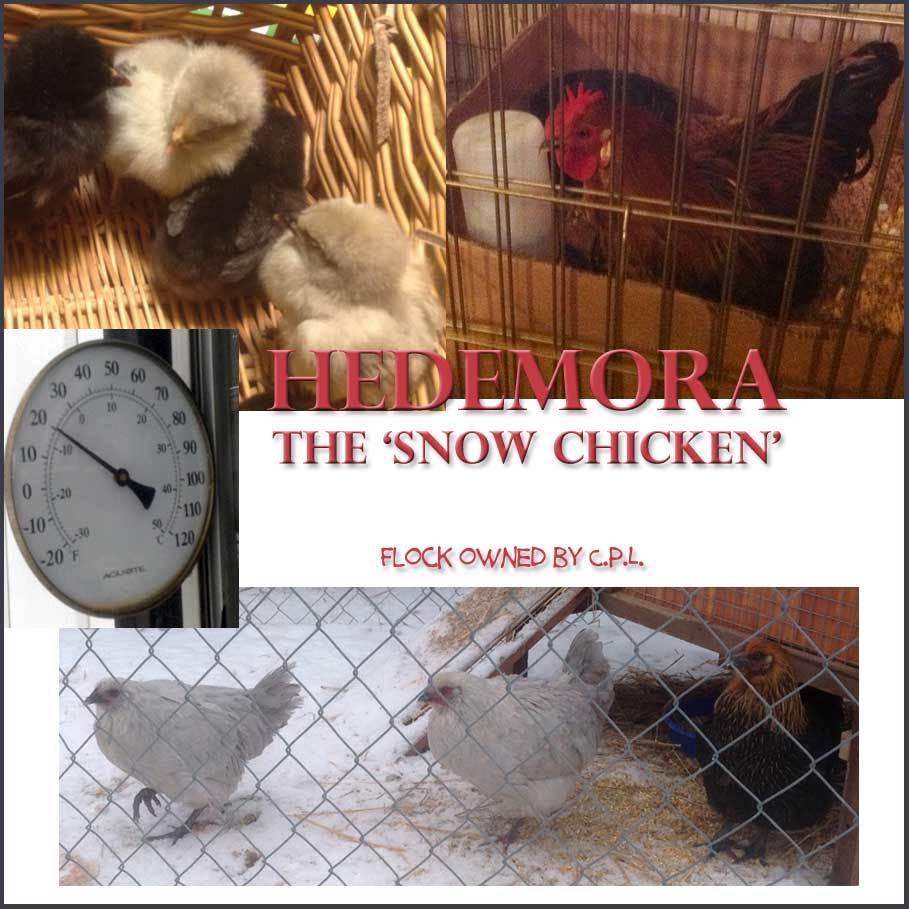 hedemora chat sites Big list of 250 of the top websites like fyndtorgetse.