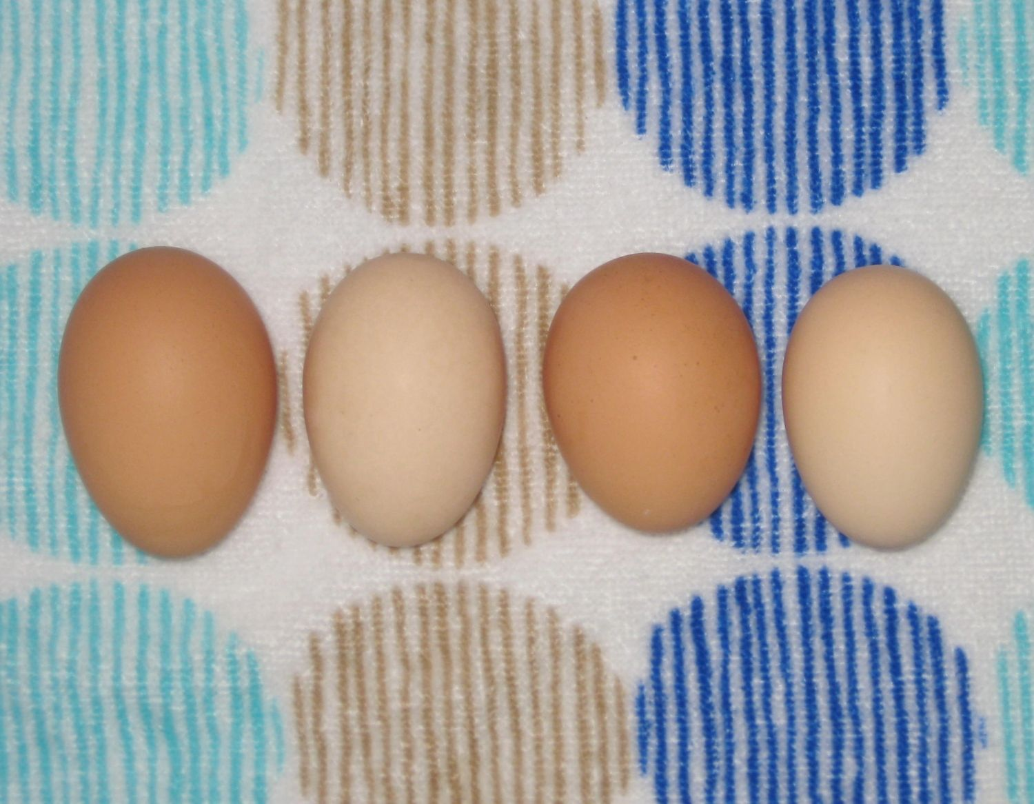 How To Raise Laying Hens In Your Backyard 25 Bsta Baby