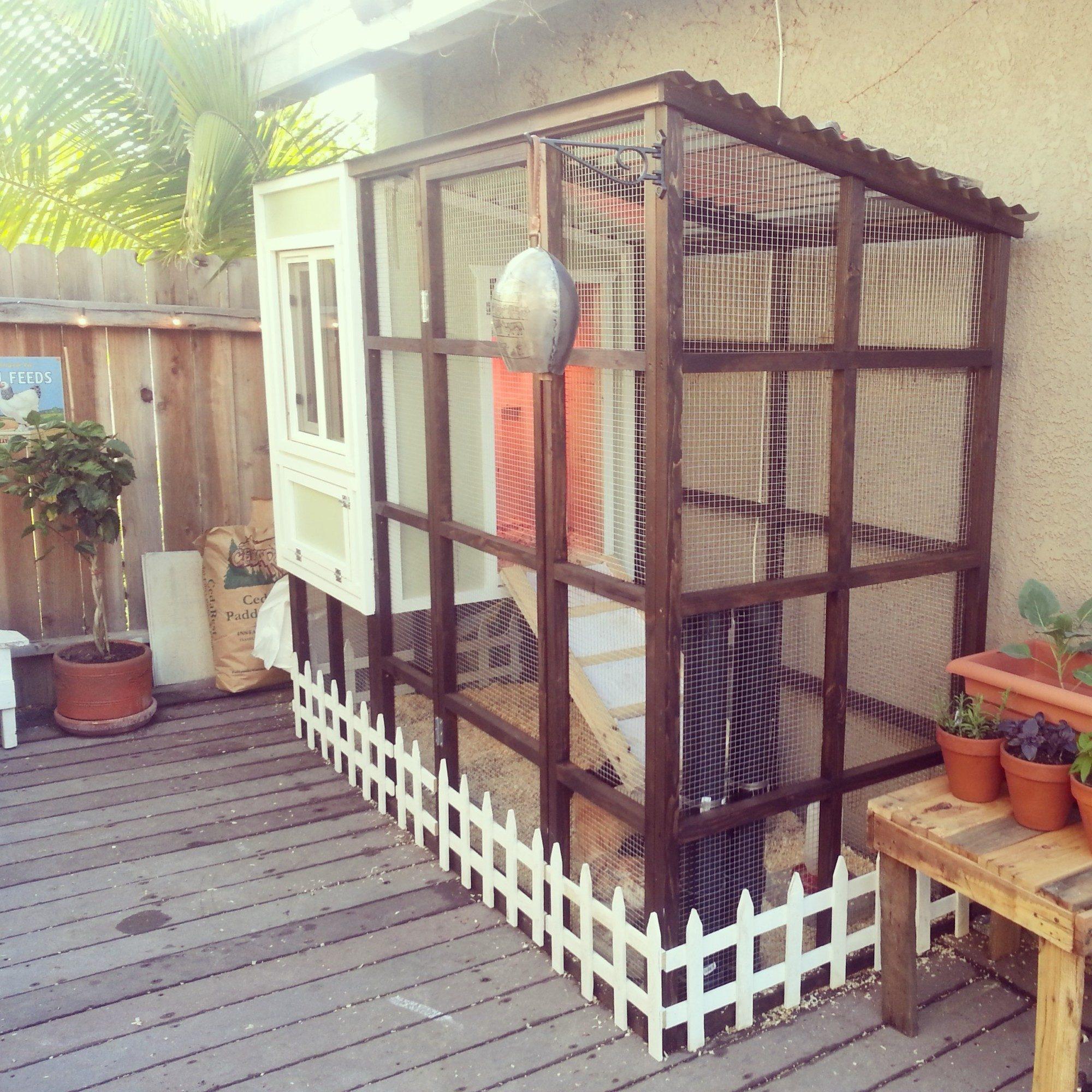 urban backyard coop pvc feeder and auto watering backyard