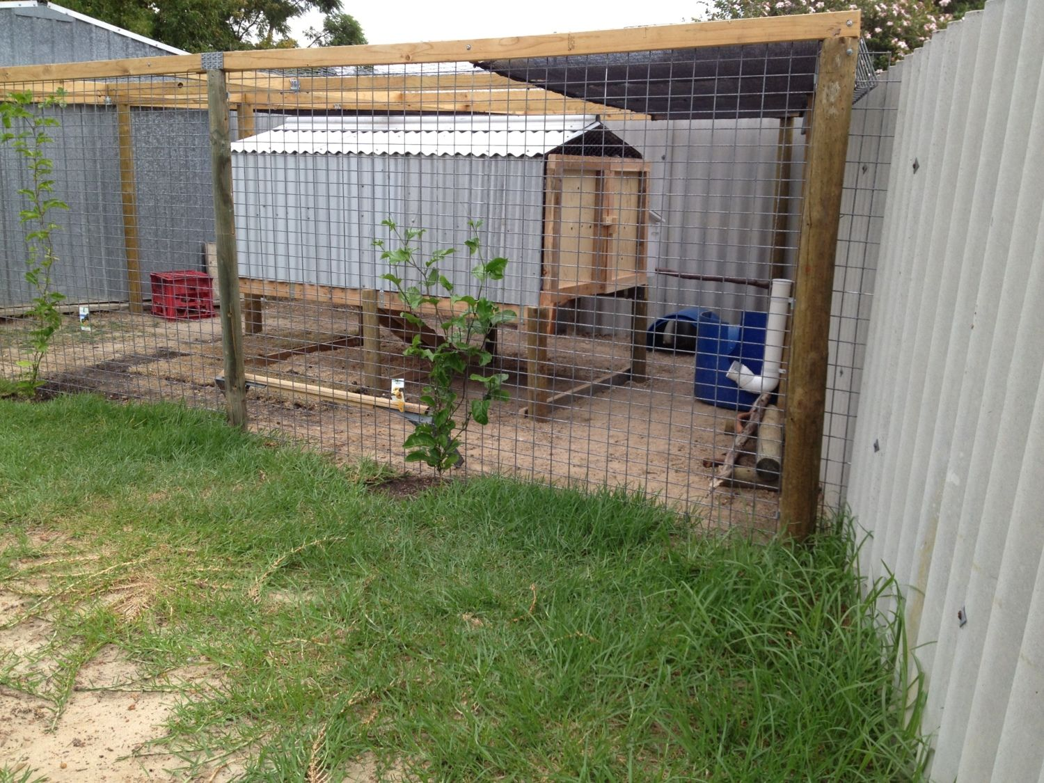 What Plants Should I Plant In My Chicken Coop