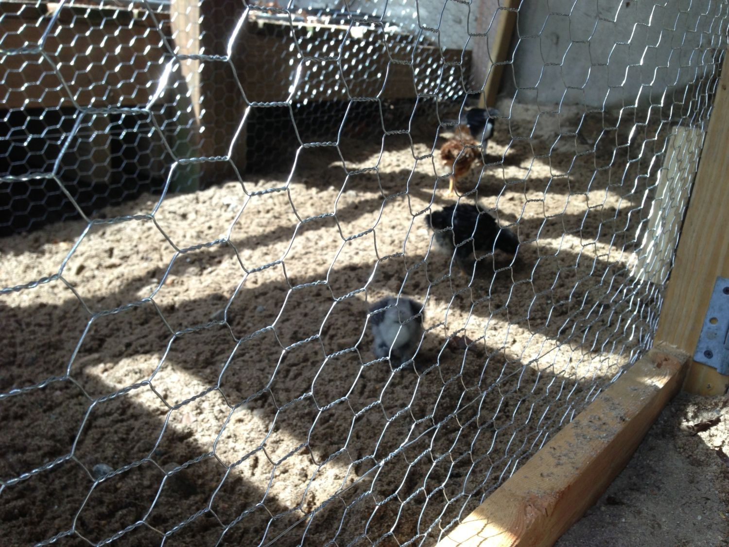 The Truth about Chicken Wire / Hex Netting... | Page 5 | BackYard ...