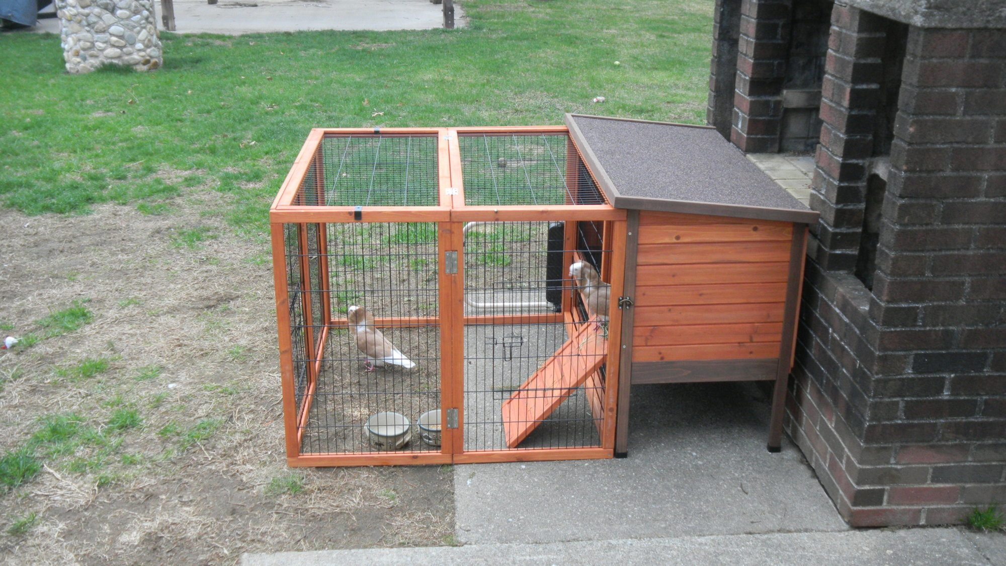 New pigeon coop backyard chickens for Pigeon coop ideas