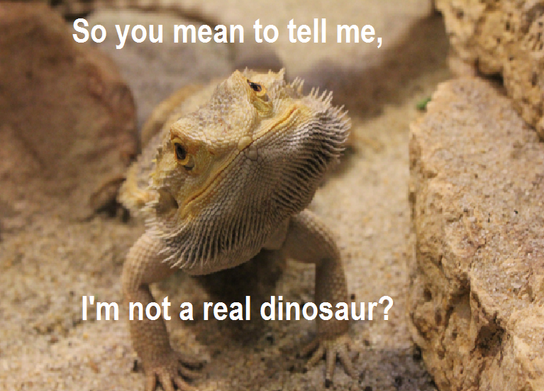 Bearded Dragon Thread!