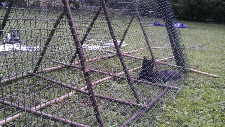 My bamboo chicken tractor | BackYard Chickens