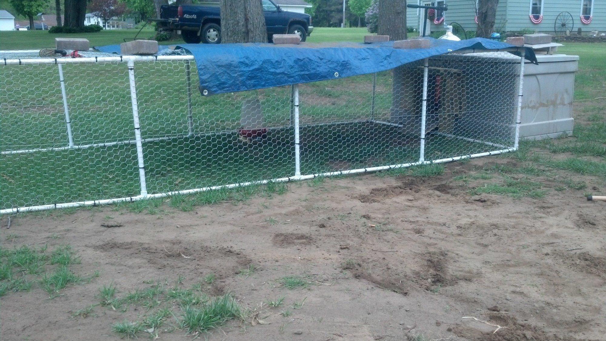 BillysFlock   BackYard Chickens