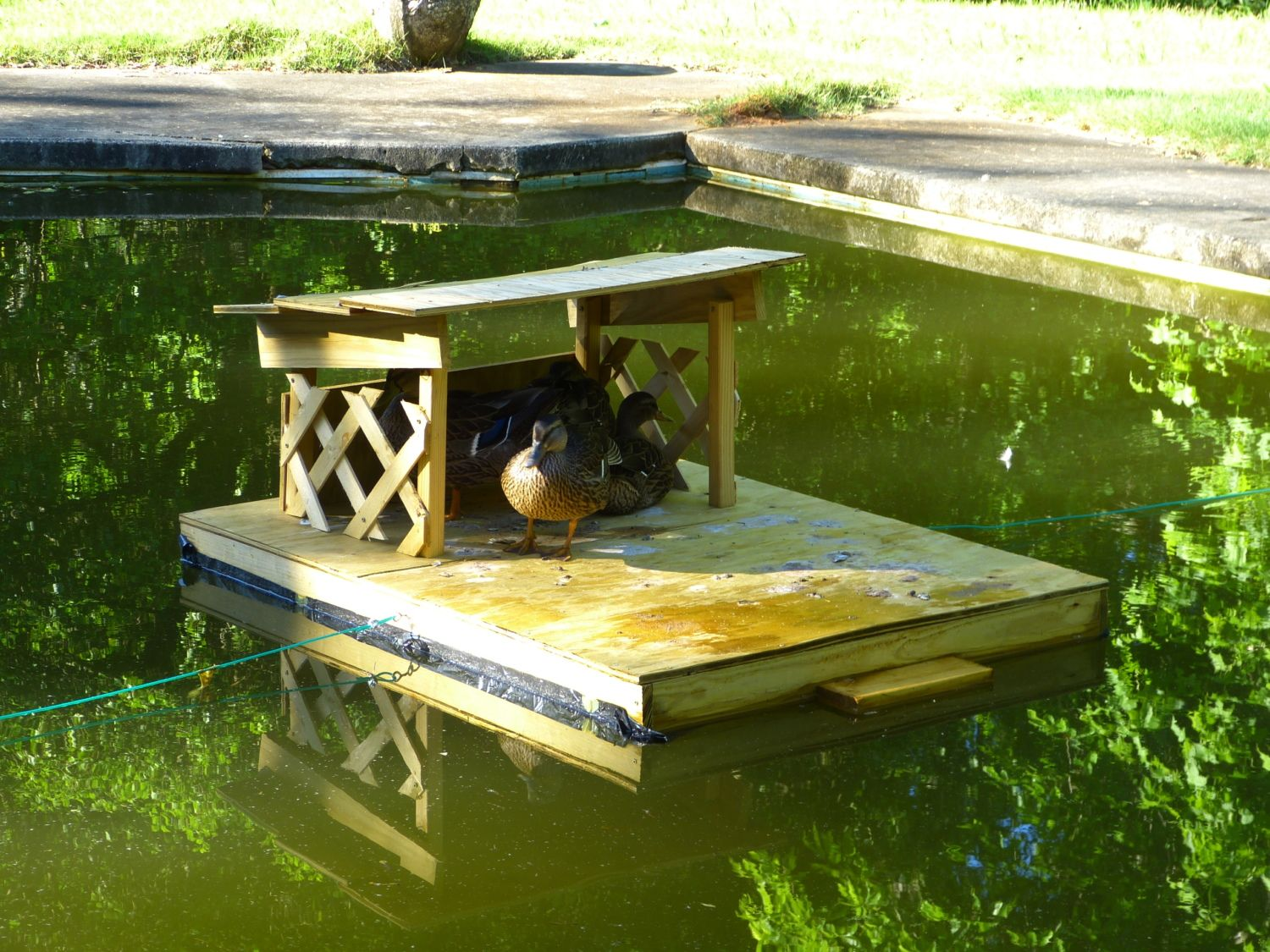 Duck Pond/pool pictures - Page 30
