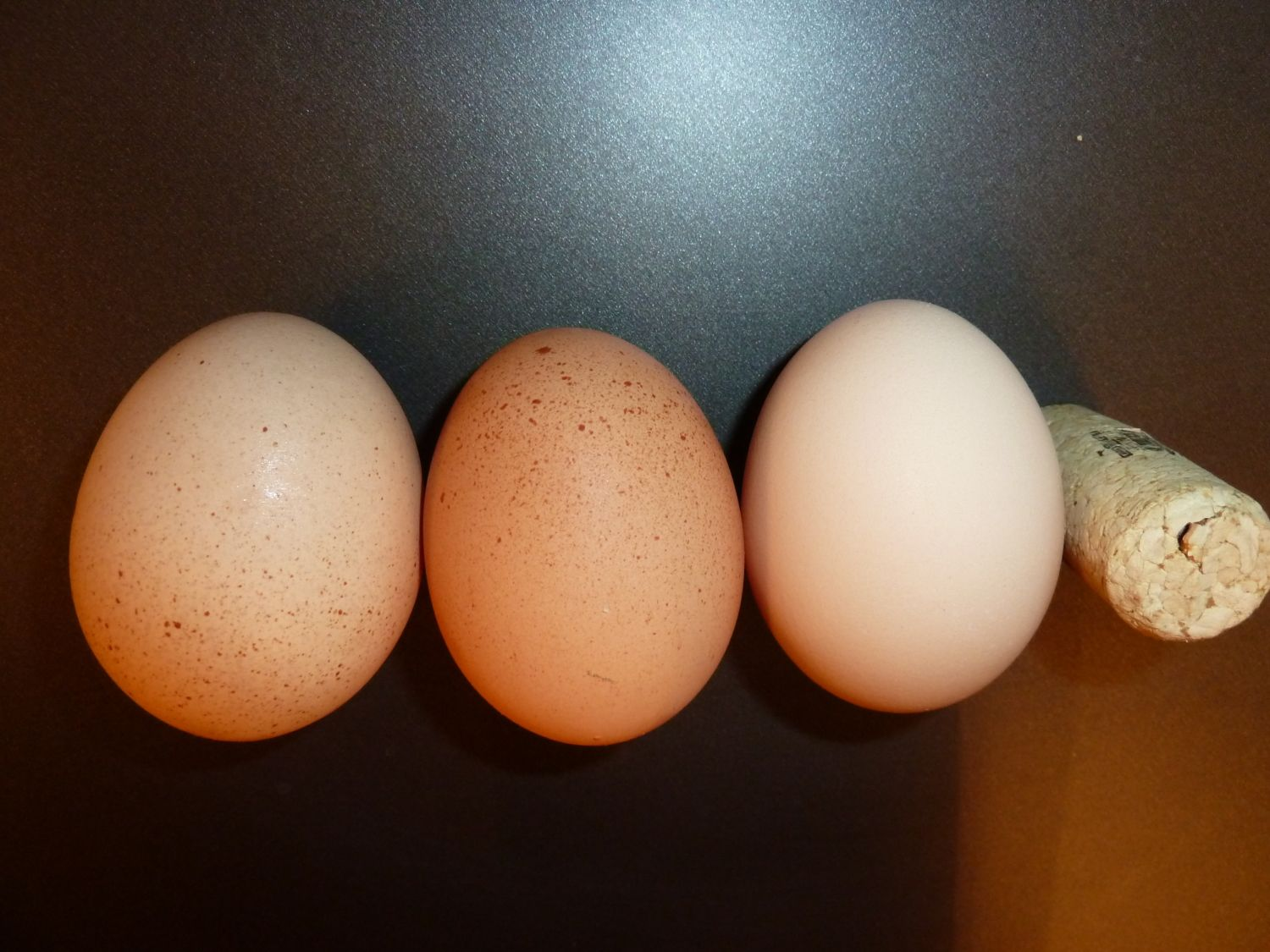 Same Chicken Laying Different Colored Eggs Pic Backyard