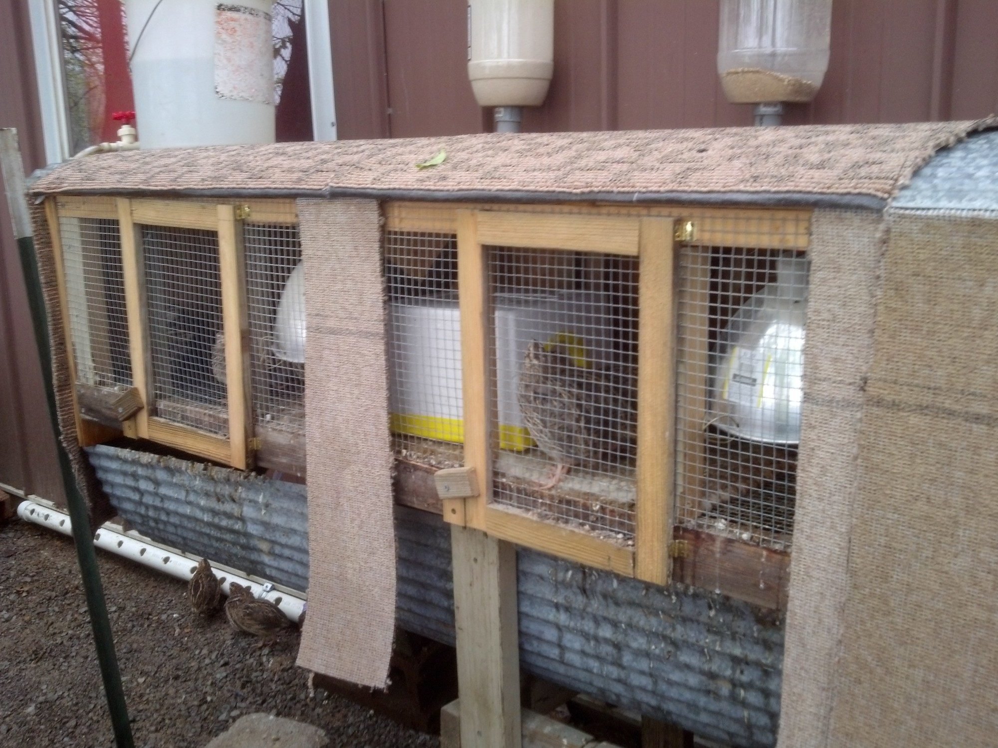 wire quail cage backyard chickens