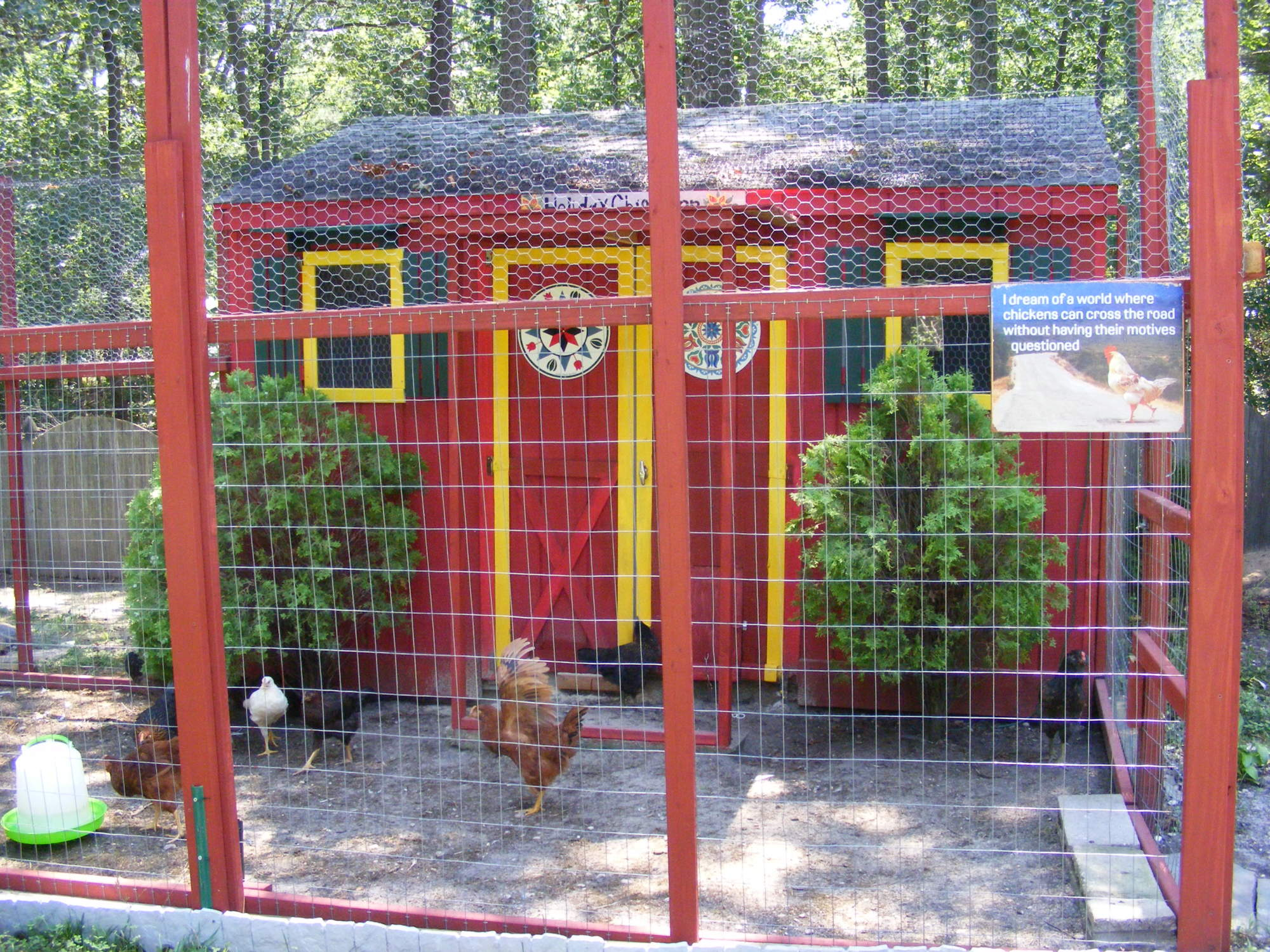 holiday inn backyard chickens