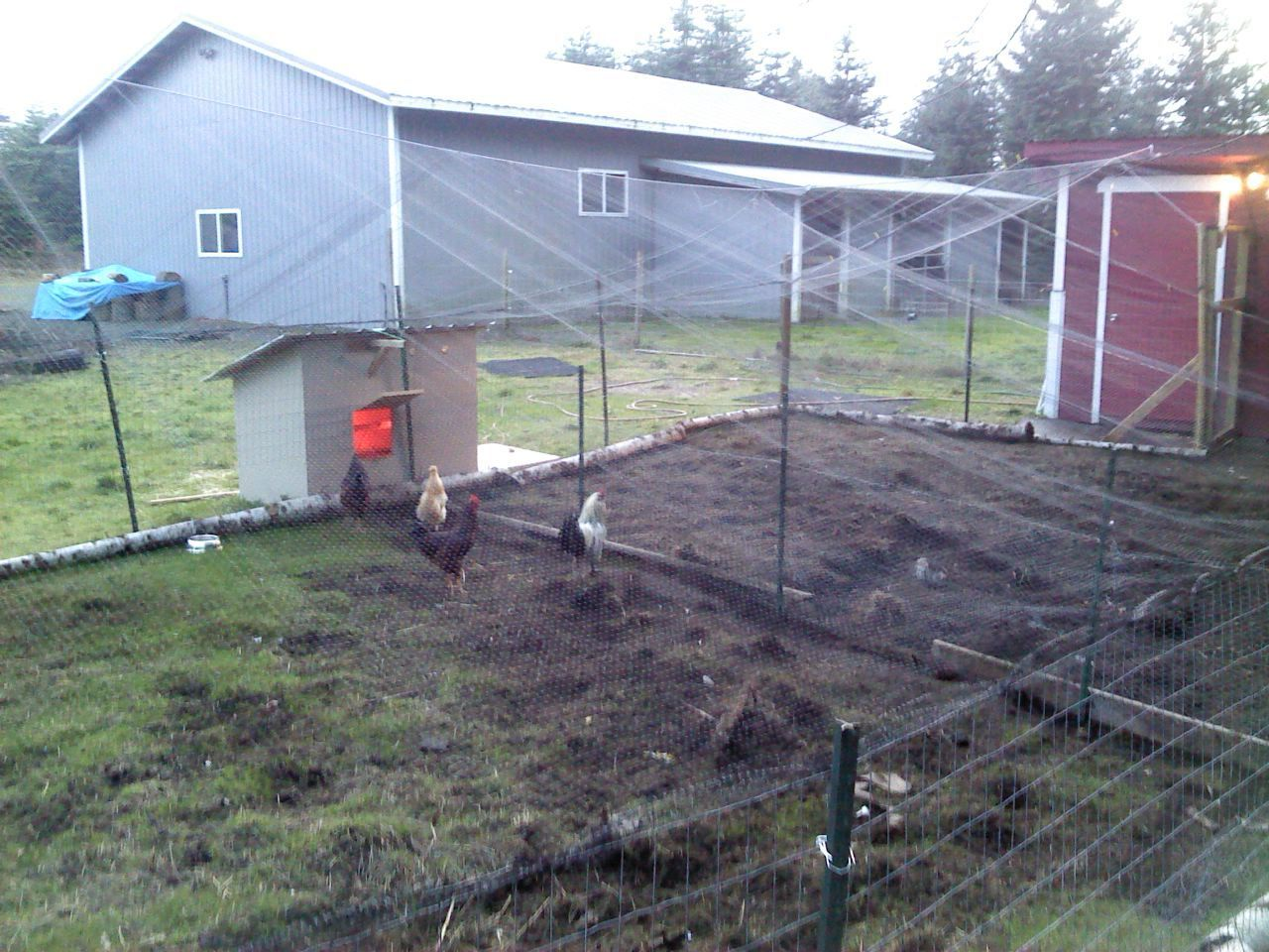 how to build a rooster coop