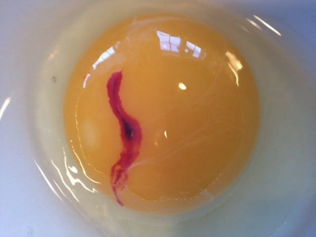 Poultry Egg Quality - Blood Spots