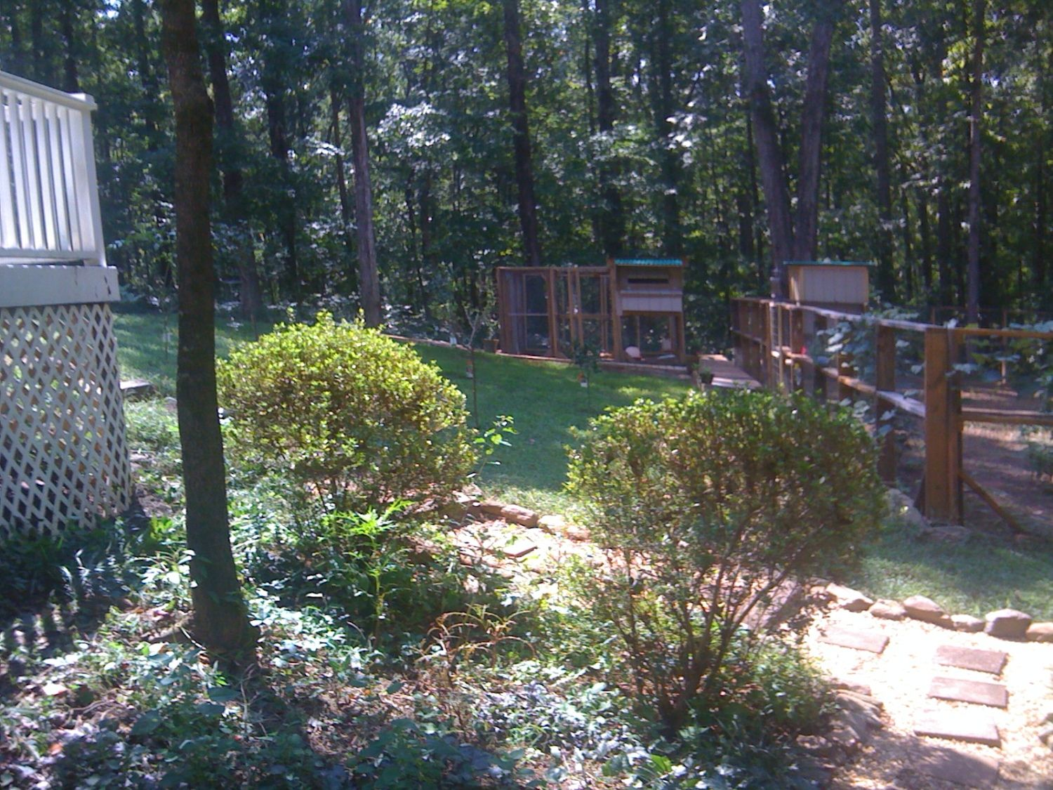carzy yankee in georgia design of a chicken coop with a boardwalk