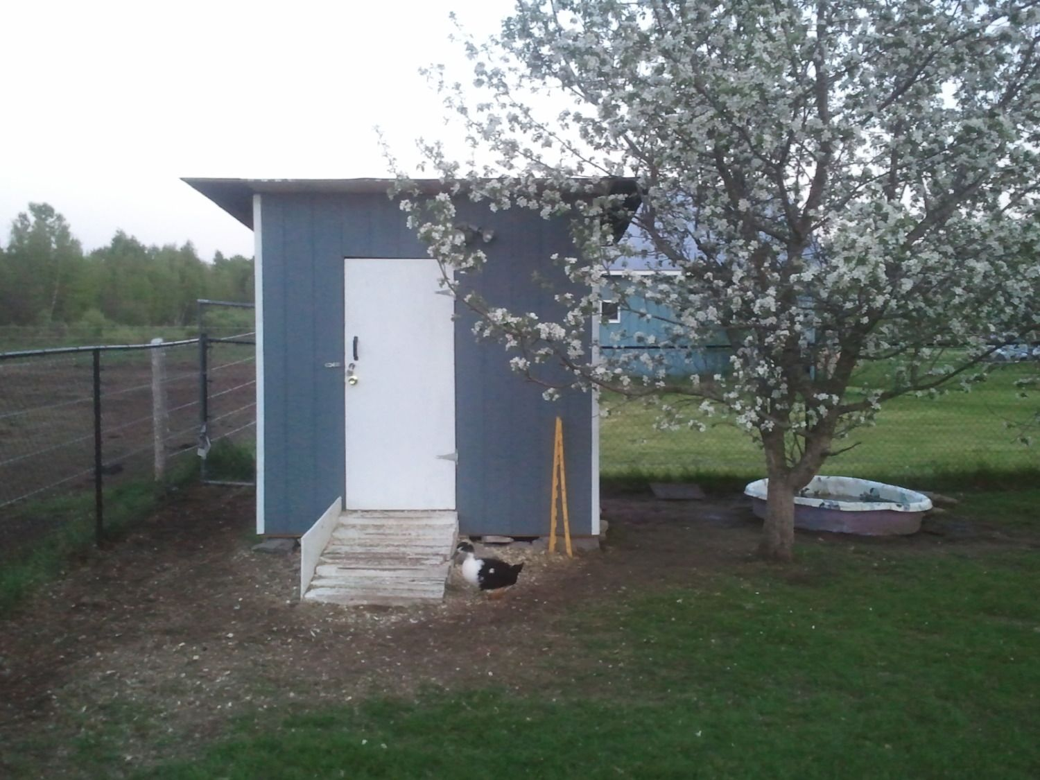 what does your duck house look like page 9 backyard chickens