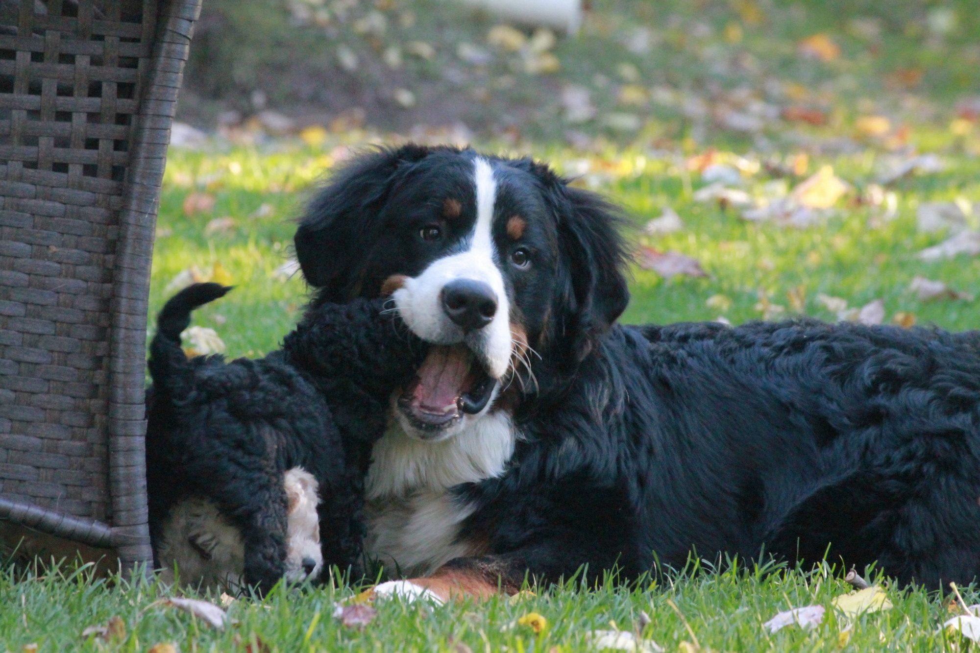 Dog Kennel Shediac
