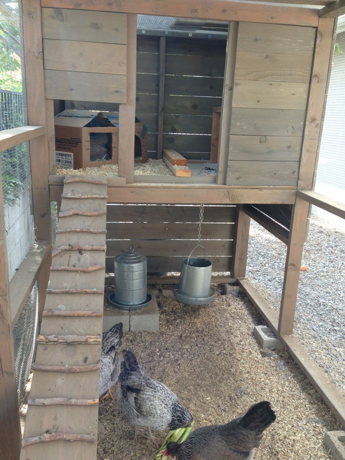 Closer, will still need the interior door before winter and permanent nest boxes