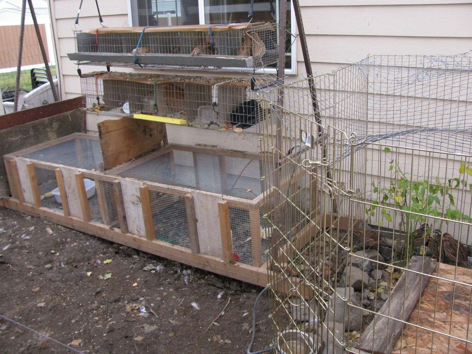 quails cage - photo #43