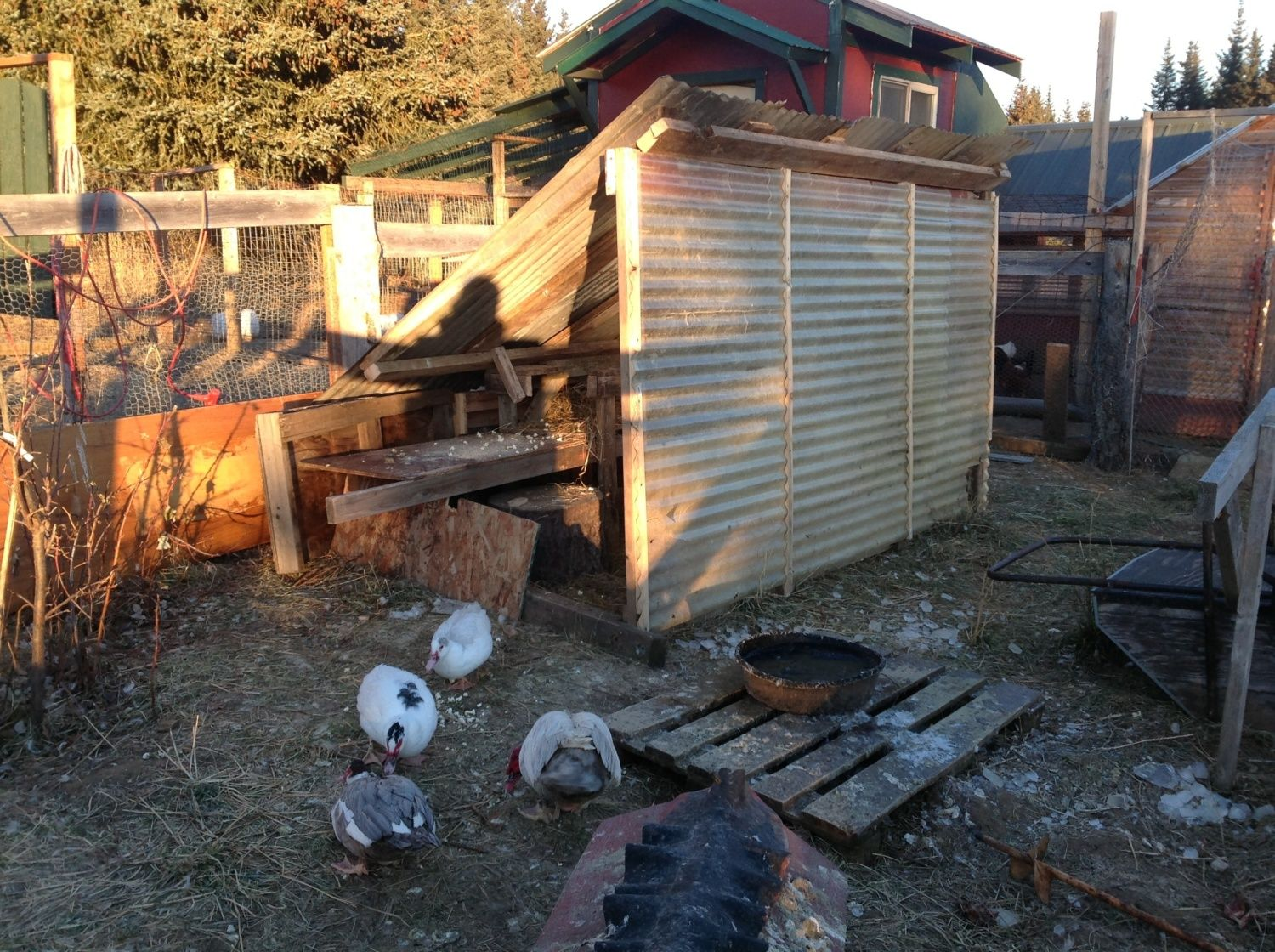 alaskan u0027s smaller coops backyard chickens