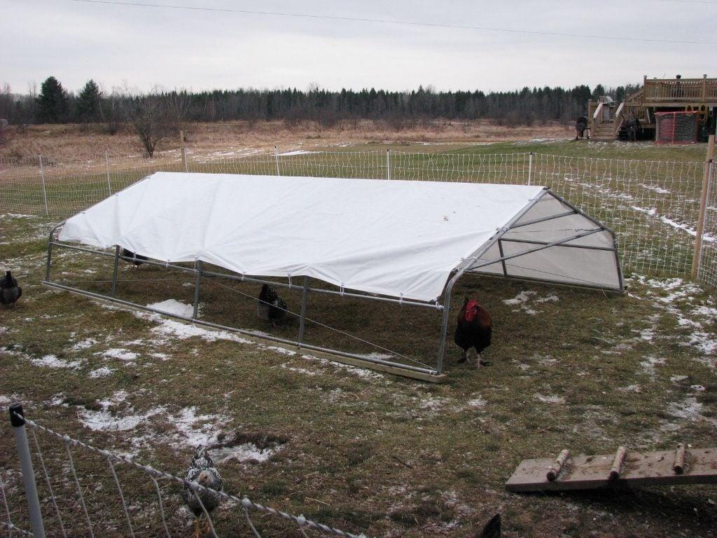 a cheap rain sun snow shelter backyard chickens