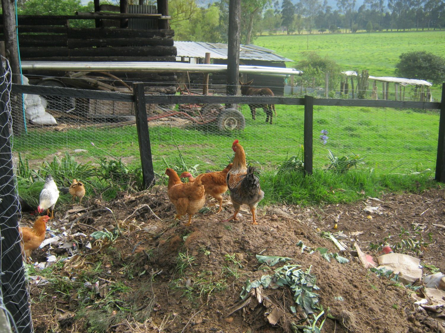 composting in the chicken run page 2 backyard chickens