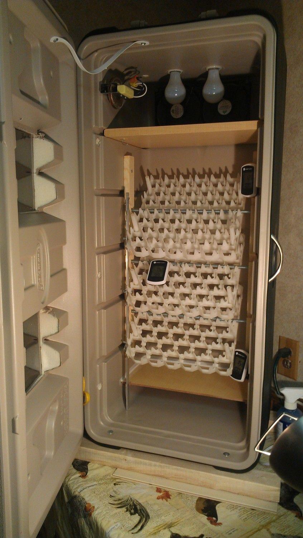 DIY Cabinet COOLER INCUBATOR