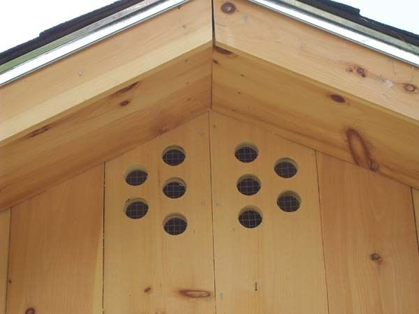 Ventilation For Chickens : Chicken coop ventilation go out there and cut more holes