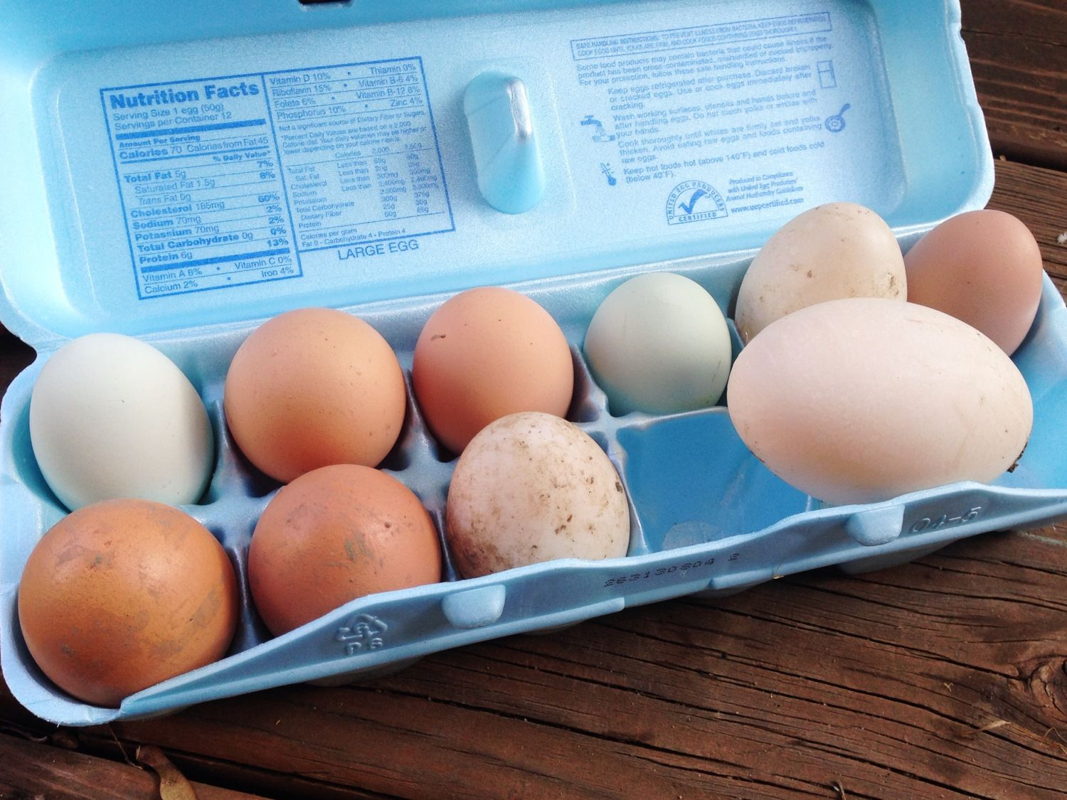anyone have pics of duck eggs vs chicken eggs backyard chickens