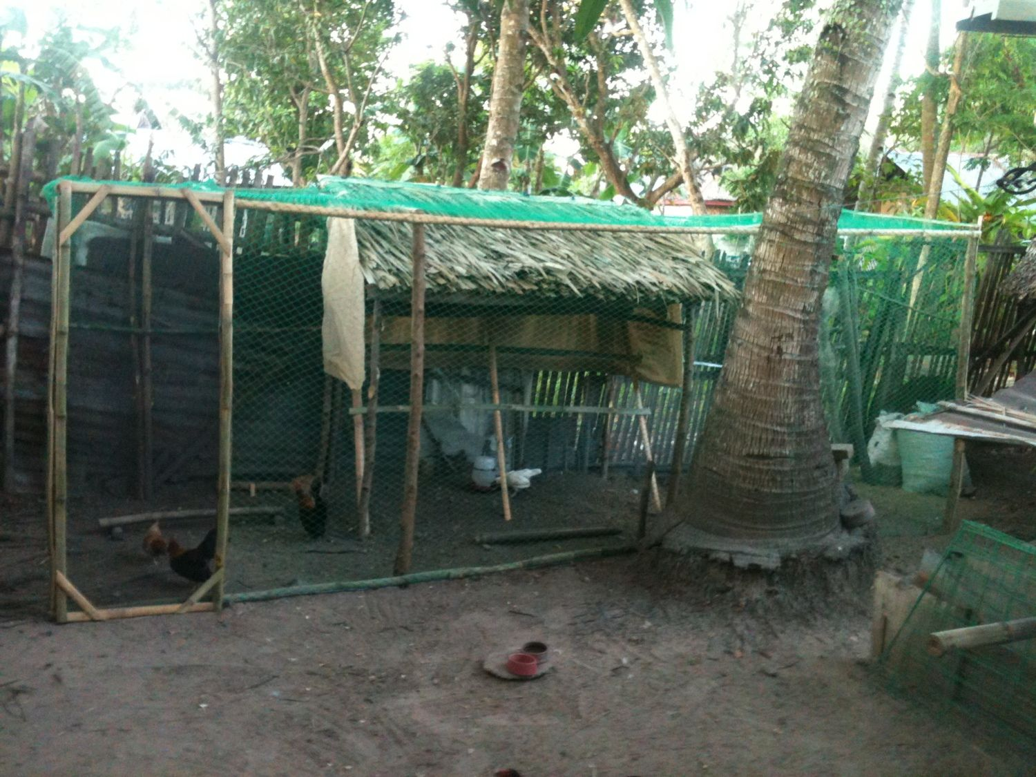 My coop made out of bamboonipa leaves and net