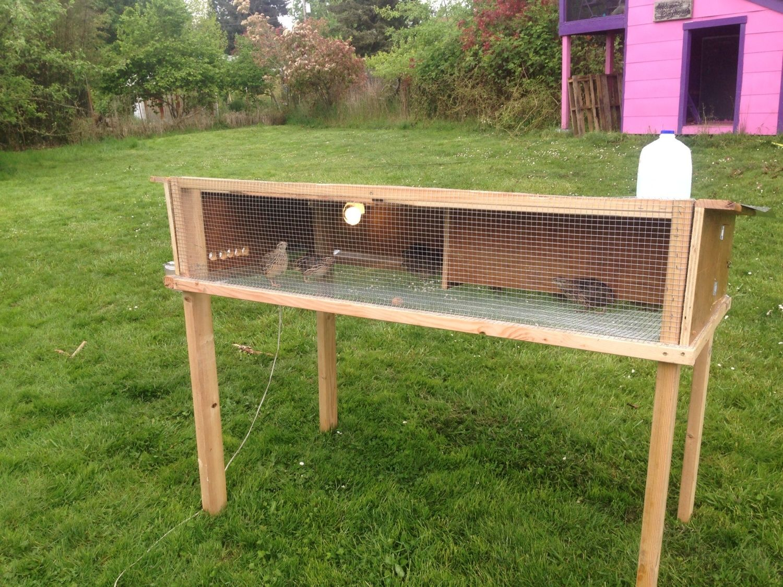 Show me your quail pens page 70 for Building a quail house