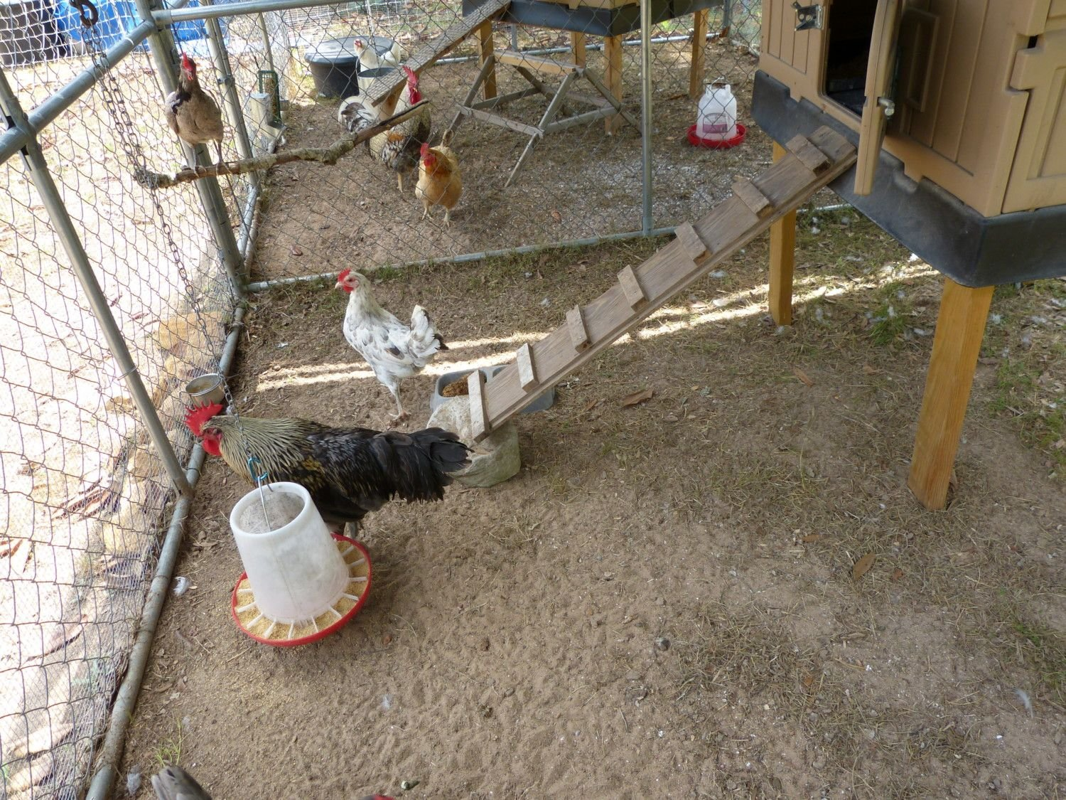 Jottings Backyard Chickens The Cluck Diagram Of A Chicken Notice How Interiors Pens Are Down To Bare Dirt Or Nearly So