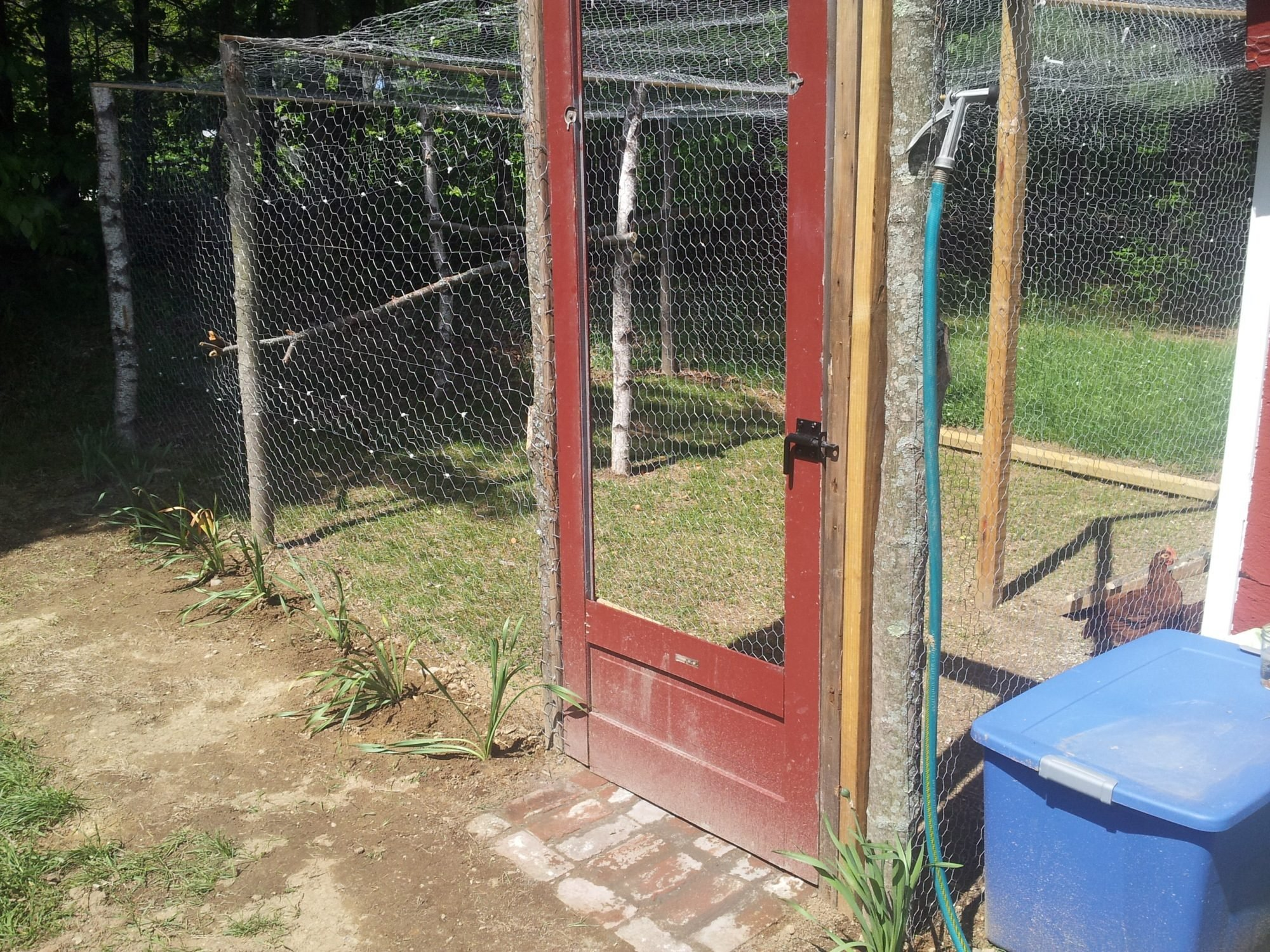 what do you keep your feed in backyard chickens