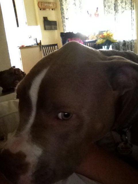 Strange boney lump on dogs head, any ideas> Pic provided