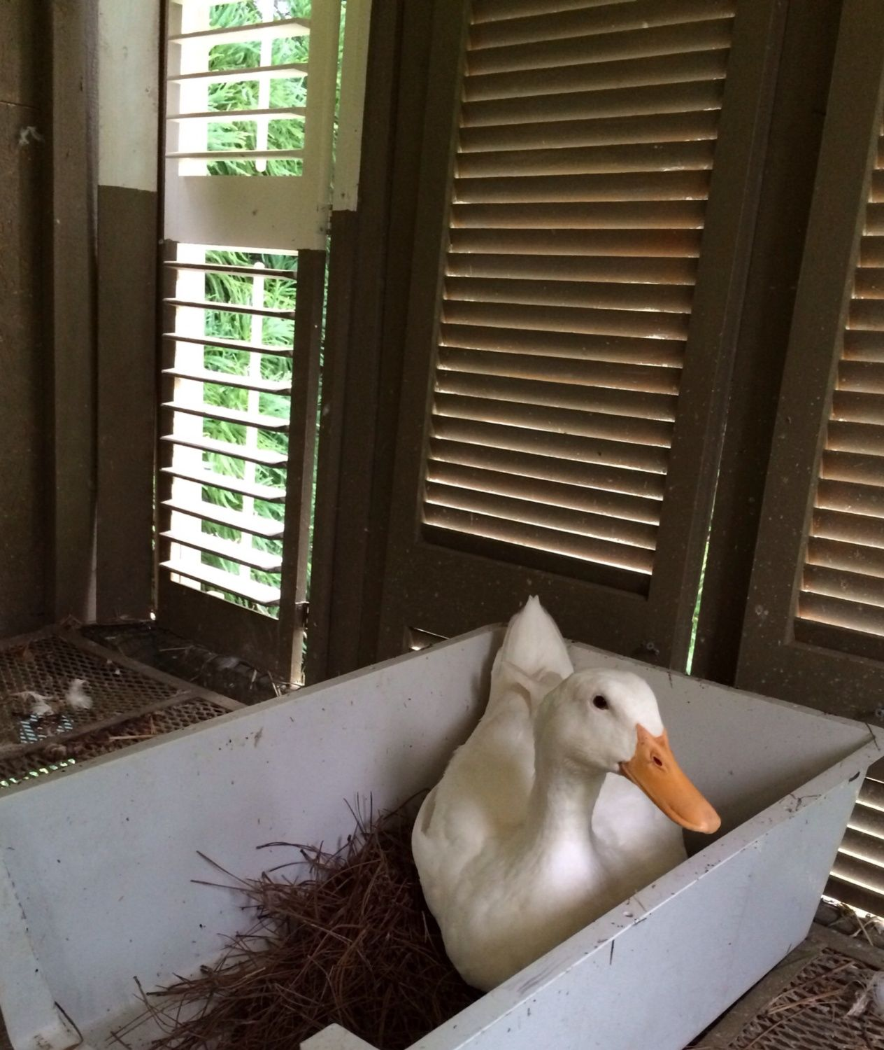 What Does Your Duck House Look Like?