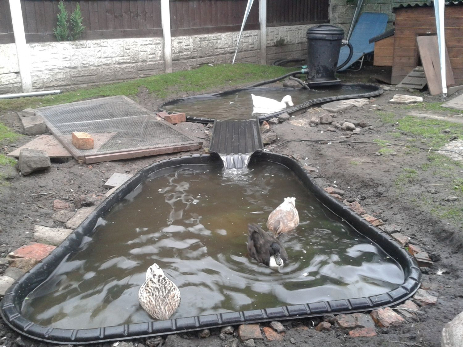 What to use for a duck pond and how to keep it clean page 5 Preformed plastic pond