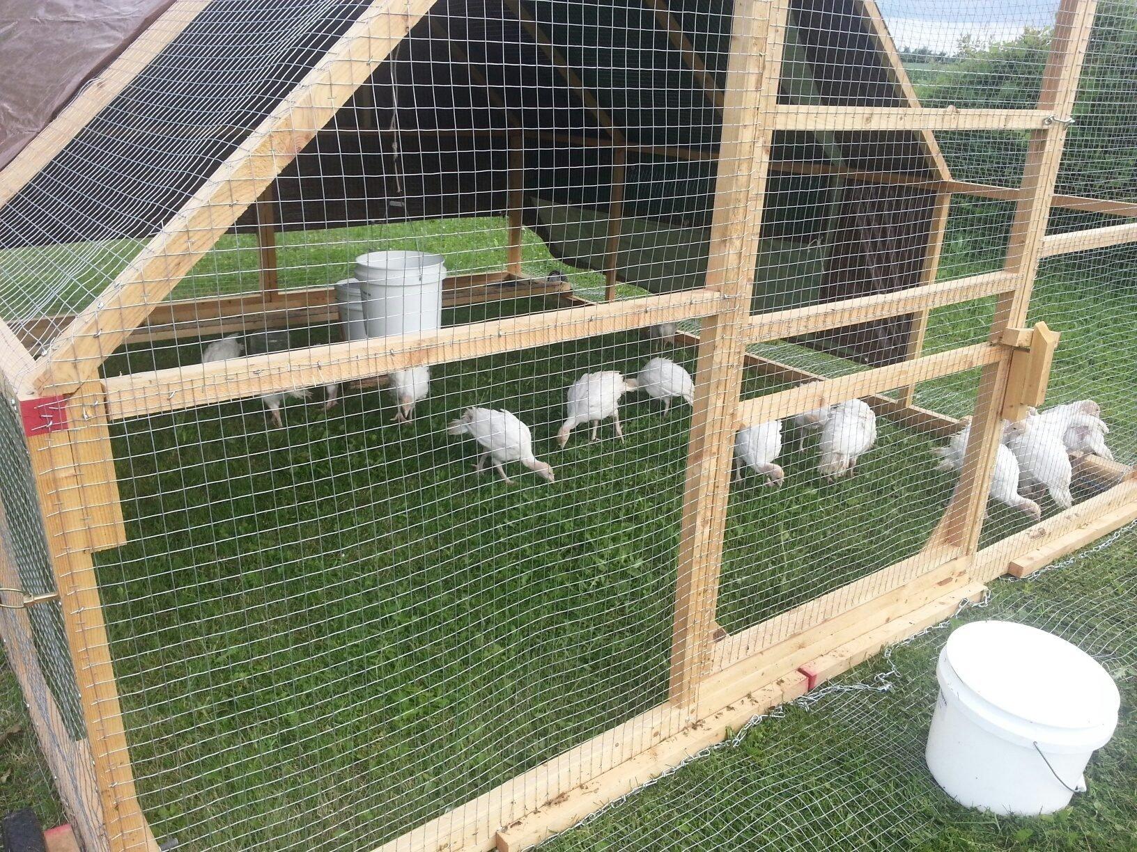 12x10 turkey tractor backyard chickens