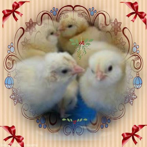 mistletoe avatar.jpg