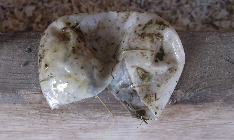 egg shells     white  thin  flexible and no white or yolk