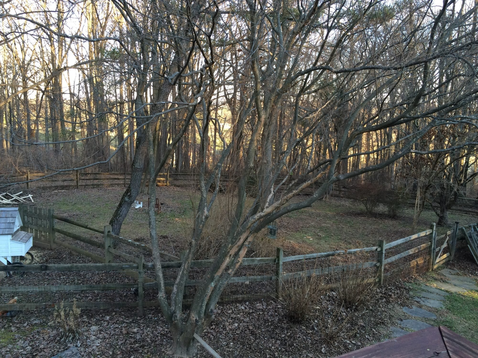 Existing fence, want to add electric fence | BackYard Chickens