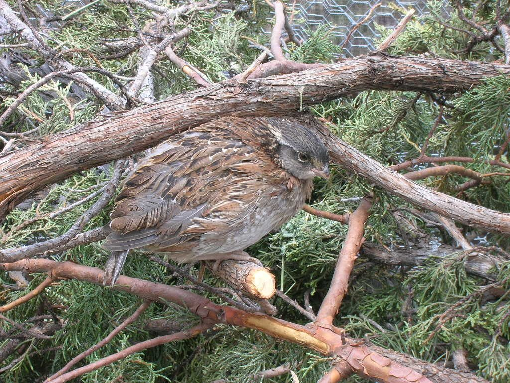 quail diseases health issues and keeping your quail healthy