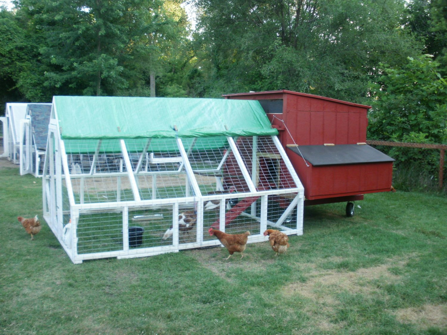 Turkey coop backyard chickens community for Moving chicken coop plans