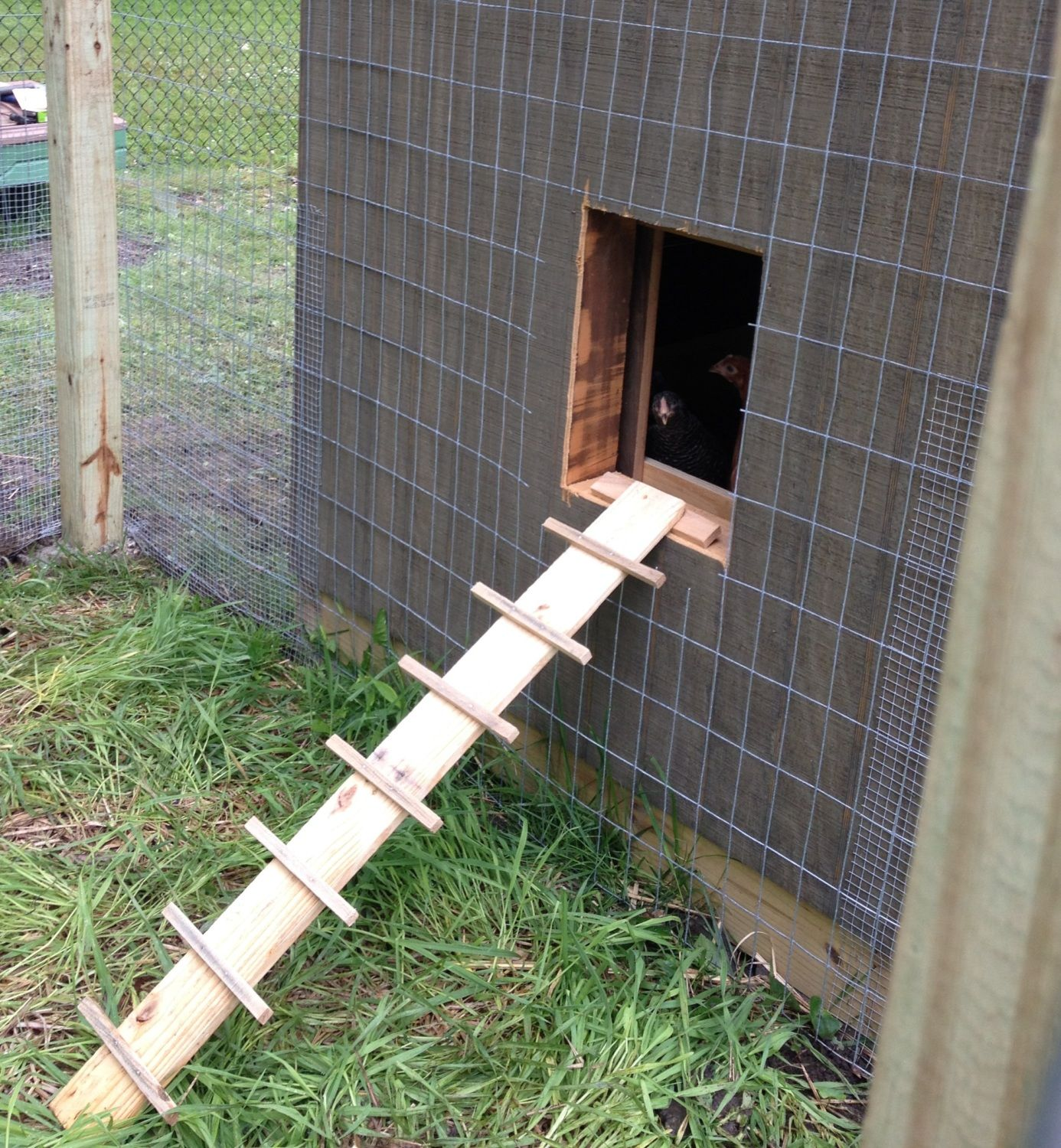 Four Hen House With Standing Room Backyard Chickens